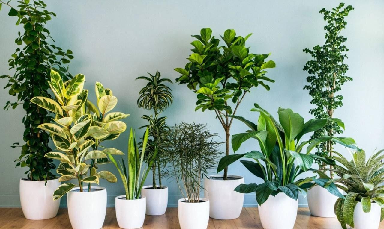 5 plantas que atraem boas energias